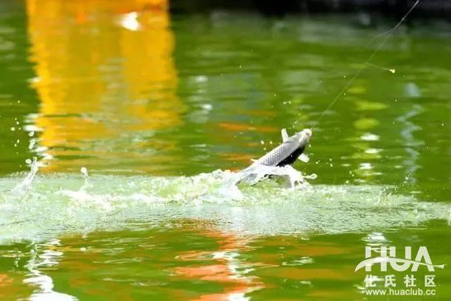 câu cá vào mùa xuân