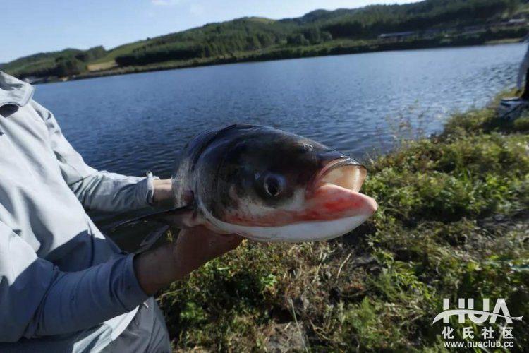 Bí quyết câu cá mè hiệu quả